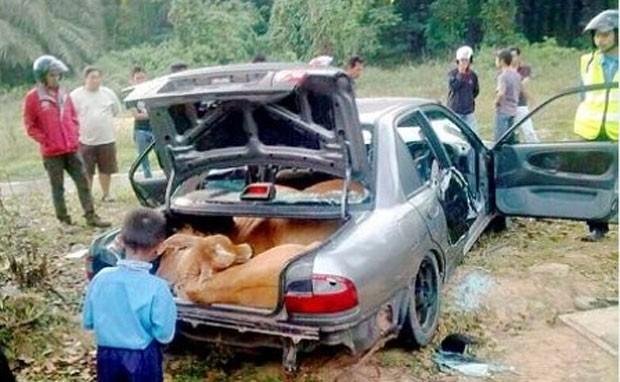 Carro com quatro vacas no seu interior foi abandonado em Kampung Siam (Foto: Reprodução/Facebook/Unnalam Arundathi Anushka maathiri Tenggaile Adikanum)