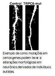 Mutação em gene de neurônio
