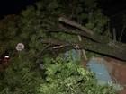 Moradores seguem sem luz após temporal que atingiu região de Bauru
