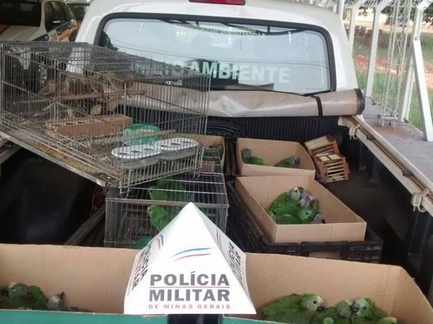 Apreensão papagaios em Frutal (Foto: Divulgação/ Polícia Militar Rodoviária)