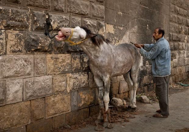 Mohamed Mustafa cobra entre 20 e 30 libras egípcias (R$ 7 a R$ 10,5) por cliente (Foto: Maya Alleruzzo/AP)