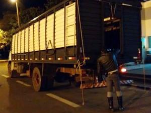 Caminhão transportava mais de 1,6 tonelada de maconha (Foto: Cedida/Polícia Militar Rodoviária)
