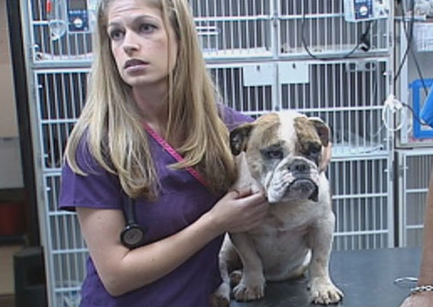 'Bella' foi levada a um hospital veterinário na cidade de Norman, onde os espinhos foram retirados. (Foto: Reprodução)