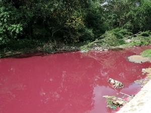 Fauna local formada por jacarés, peixes e mamíferos pode ser afetada, segundo geólogo  (Foto: Jamile Alves/G1 AM)