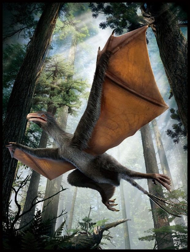 Concepção artística do dinossauro recém-descoberto Yi qi  (Foto: Dinostar Co. Ltd/Divulgação)