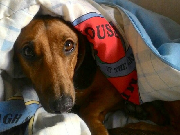 O cãozinho Rocky precisou ficar em sua 'cabana' para se proteger do frio em Ribeirão Preto (Foto: Vera Oliveira/ VC no G1)