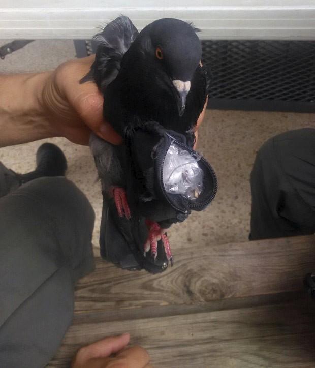 No saquinho, pombo carregava 14 gramas de cocaína e 14 gramas de maconha (Foto: Costa Rica Ministry of Justice and Peace/Reuters)