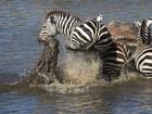 Veja zebra 'nocauteando' crocodilo e mais animais que fugiram de ataques