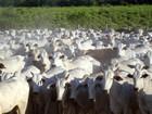 MT mantém liderança nos abates de bovinos no 3º trimestre do ano