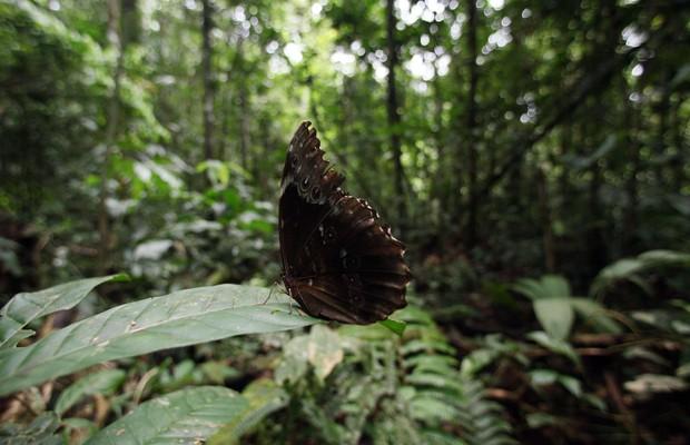 Borboleta pousa em folha no Parque Nacional de Yasuni, no Equador (Foto: Dolores Ochoa/AP)