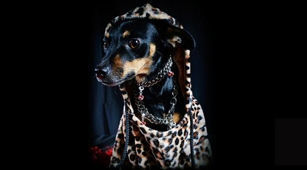 985948412 Roupas e colares para cães são alguns dos produtos vendidos pela James Black  (Foto:
