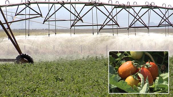 Tecnologia dos sistemas de irrigação ajudam na produtividade (Foto: Reprodução/TV Fronteira)