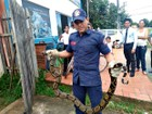 Jiboia de 2,20 metros é capturada em quintal de casa, em Sena Madureira