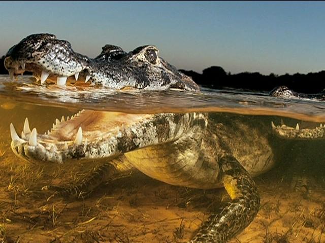 Fotografia de natureza - Luciano Candisani  (Foto: reprodução GloboNews)