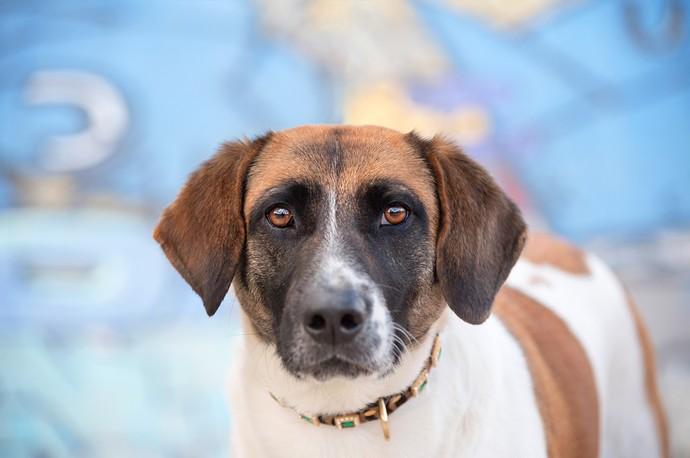 As fotos caprichadas ajudam os cachorros a serem adotados mais rápido  (Foto: Joana Ferreira Alves / Calliandra de Souza Anderle / RPC)