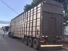 Carreta com 96 cabeças de gado é apreendida no sul do Tocantins