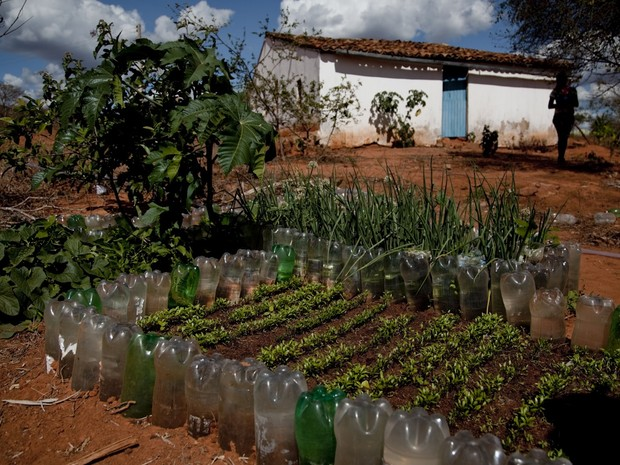 Canteiro em terreno comunitário é usado para plantar sementes durante a seca na Paraíba (Foto: Fernanda Rappa/Divulgação)