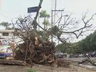Comerciantes relatam prejuízo com falta de energia em São Carlos e Ibaté