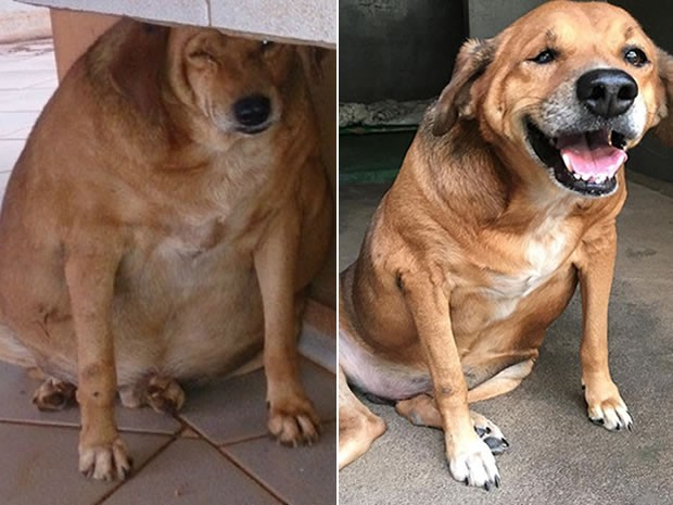 'Bolinha' perdeu 14 kg e ONG pediu doação para continuar tratamento. (Foto: Nill Vianna/Arquivo pessoal/Divulgação PAM Pet)