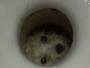 Bombeiros resgatam cãozinho preso em privada na China