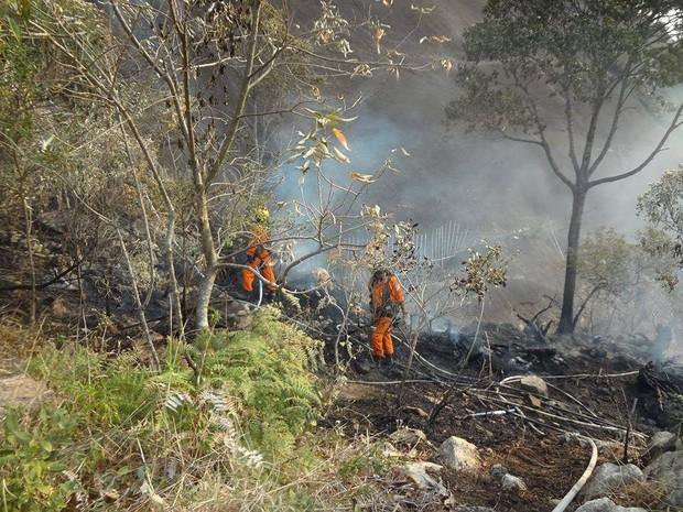 Bombeiros e equipes do Rebio-Araras combatem queimadas na localidade (Foto: Divulgação/ Rebio Araras)