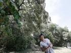 Teias gigantes de aranhas aparecem em árvores de parque nos EUA