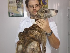 Bull Terrier ganhou mais de um quilo desde resgate (Foto: Reprodução / TV TEM)