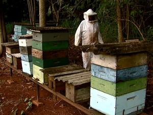 João Franco perdeu milhares de abelhas neste ano (Foto: Ely Venâncio/EPTV)