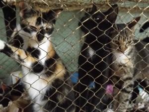 Dona Bene cuida também de 30 gatos (Foto: Caio Silveira / G1)