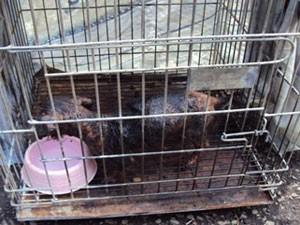 Cadela da raça Yorkshire foi encaminhada para Hospital Veterinário (Foto: Arquivo/ Polícia Militar de Meio Ambiente)