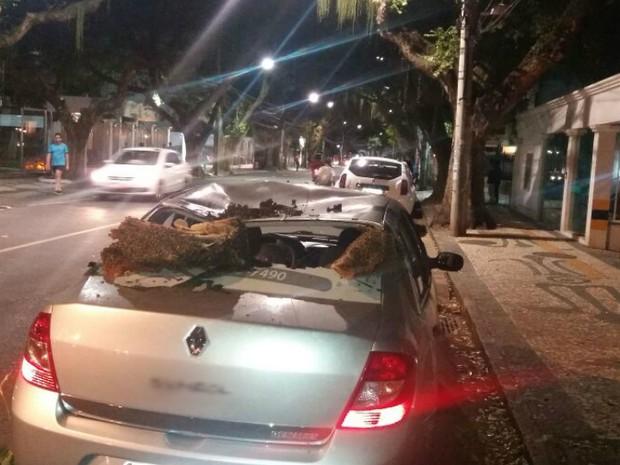 Colmeia cai de árvore, amassa teto e destrói vidro traseiro de carro (Foto: Eduardo José Santos/Acervo pessoal)