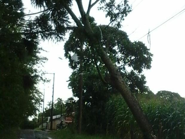 Árvore caiu na rede elétrica no Bairro Chapadinha (Foto: Arquivo Pessoal/ Ana Flávia Sena)