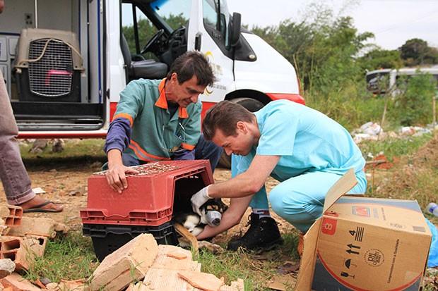 Samu Animal utiliza ambulância equipada com UTI para resgatar animais em situação de alto risco  (Foto: Gustavo Magnusson)