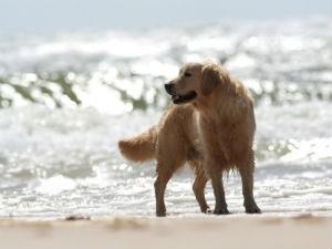 Levar os animais à praia exige uma atenção especial com parasitas (Foto: Divulgação)
