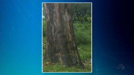 Agricultor morre após ser atingido por raio ao cortar árvore no RS