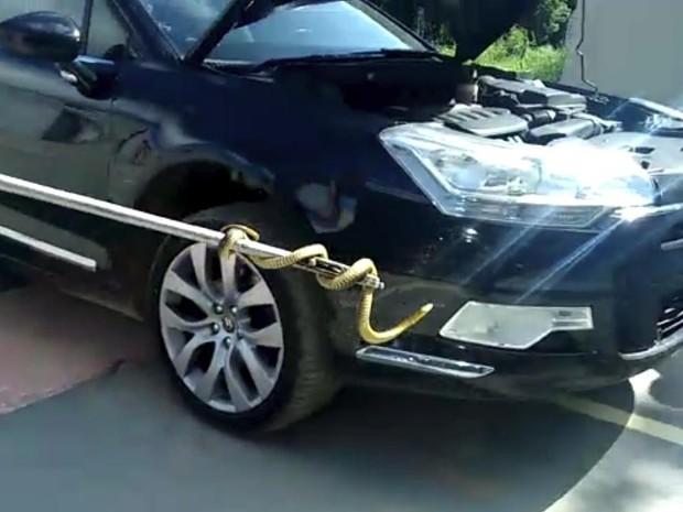 Cobra foi retirada do motor de um Ômega em SC (Foto: Corpo de Bombeiros/Divulgação)