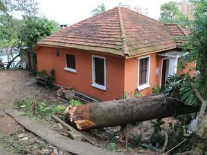 Árvore é arrancada pela raiz na rua Silveiro em Porto Alegre (Foto: Joyce Heurich/G1 RS)
