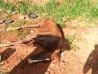 Moradora flagra cavalo maltratado em bairro de São José do Rio Preto