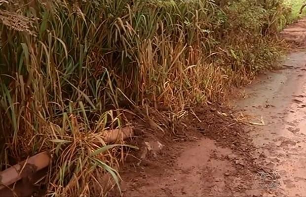 Produtores rurais reclamam de falta de manutenção e se unem para limpar ponte, na GO-184, em Jataí (Foto: Reprodução/TV Anhanguera)