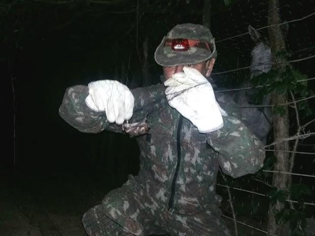 Morcegos transmissores da raiva são capturados na Raposa (Foto: Divulgação/ Aged)