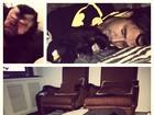 Latino publica foto dormindo com macaco de estimação