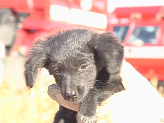 Cão foi encontrado por bombeiro e resgatado das chamas (Foto: Reprodução/ TV TEM)
