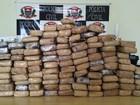 Polícia acha 55 quilos de maconha enterrados em mata fechada em SP