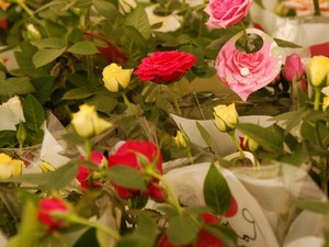 Festival de Flores de Holambra em Caruaru  (Foto: Divulgação/ Antonio Roque)