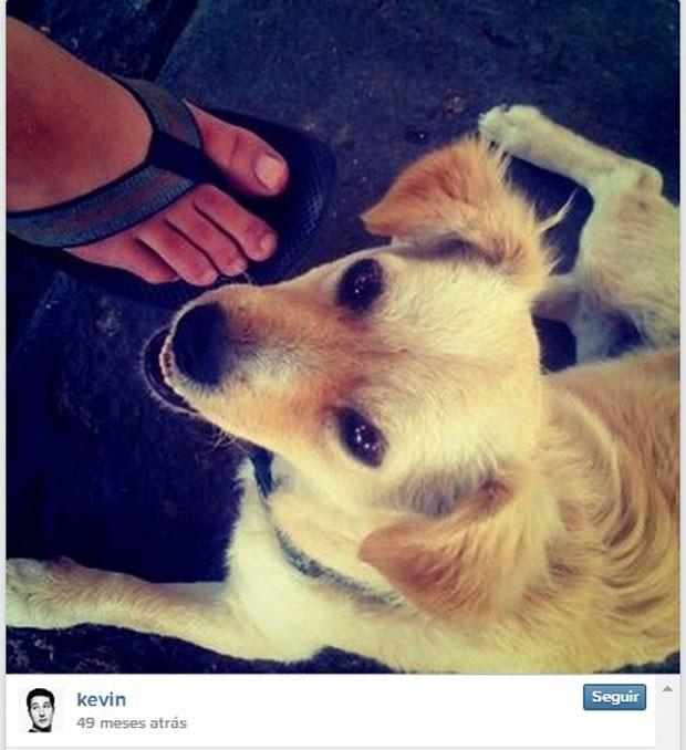 Primeira foto publicada no aplicativo Instagram faz quatro ano mostra cão Golden Retriever achado por Kevin Systrom na Califórnia (EUA). (Foto: Divulgação/Instagram)