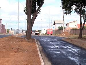 Jequitibá está no meio da rua em Hortolândia (Foto: Reprodução / EPTV)