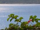 Nível de água da represa de Furnas atrai turistas e agrada comerciantes