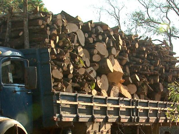 Um dos caminhões encontrados pela GCM em Ribeirão Preto, SP, estava carregado com a madeira (Foto: Ronaldo Gomes/EPTV)