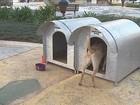 Mulher é flagrada furtando objetos de casinhas para animais de rua em SC