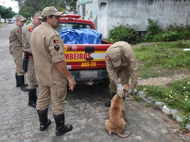 Após sair da galeria, cachorra recebeu carinho dos bombeiros (Foto: Walter Paparazzo/G1)